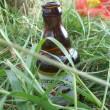 sonnemondsterne-2009-hannoveraner-herrenhaeuser-bier